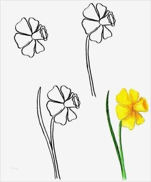 Blumen Zeichnen Vorlagen Beste Auf Se Seite Können Sie ...