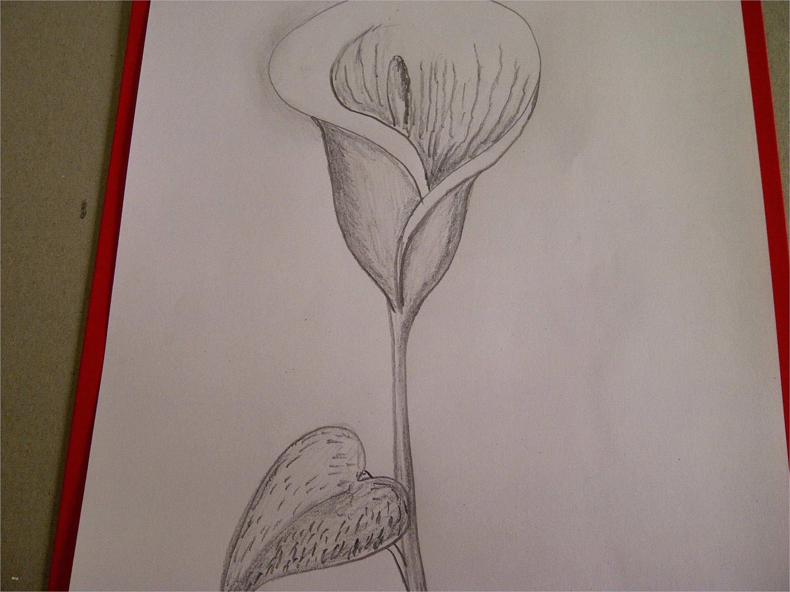 blumen zeichnen vorlagen erstaunlich calla zeichnen blume