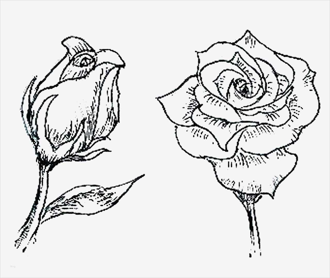 Blumen Zeichnen Vorlagen Inspiration Wand Blumen Selber ...