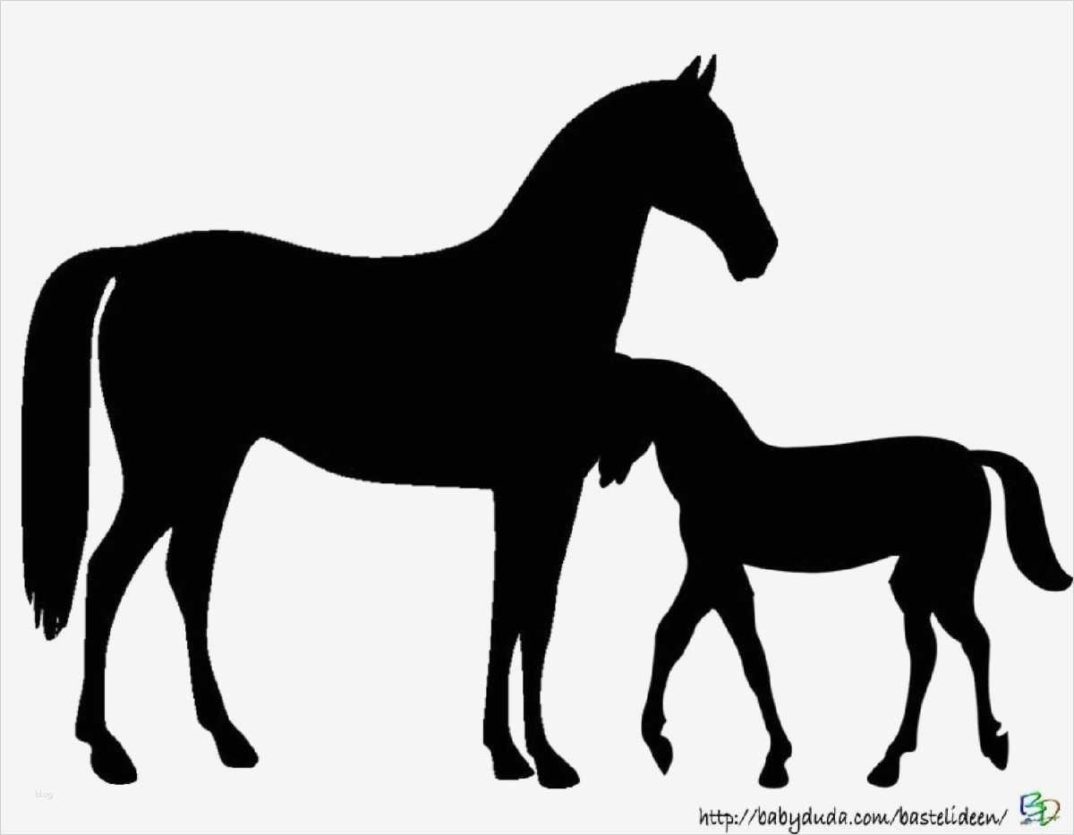 boxenschilder für pferde vorlagen cool ausmalbilder pferd
