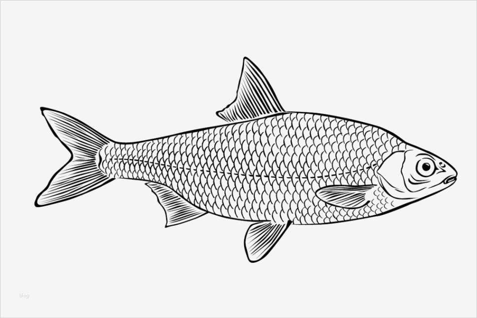 fische zeichnen vorlagen angenehm vorlagen zum ausmalen