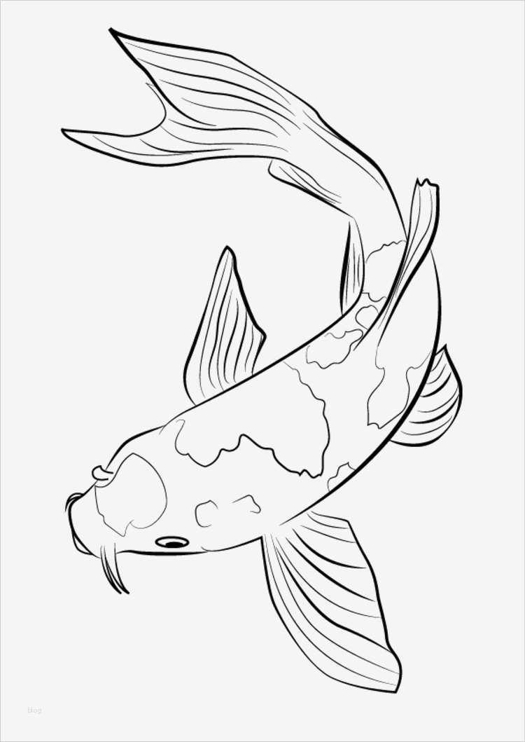 fische zeichnen vorlagen angenehm zentangle vorlagen