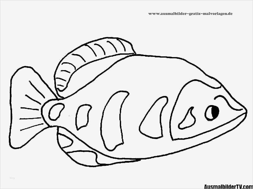 fische zeichnen vorlagen elegant ausmalbilder fische