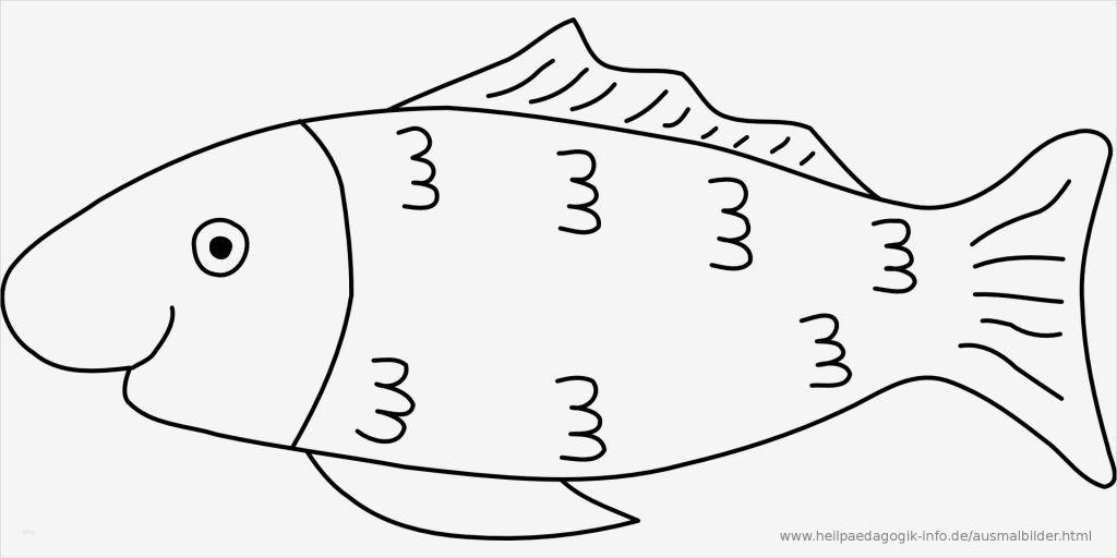 fische zeichnen vorlagen neu ausmalbilder fische  vorlage