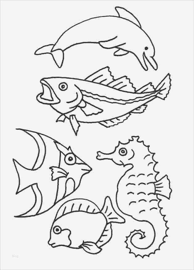 fische zeichnen vorlagen wunderbar window color vorlagen