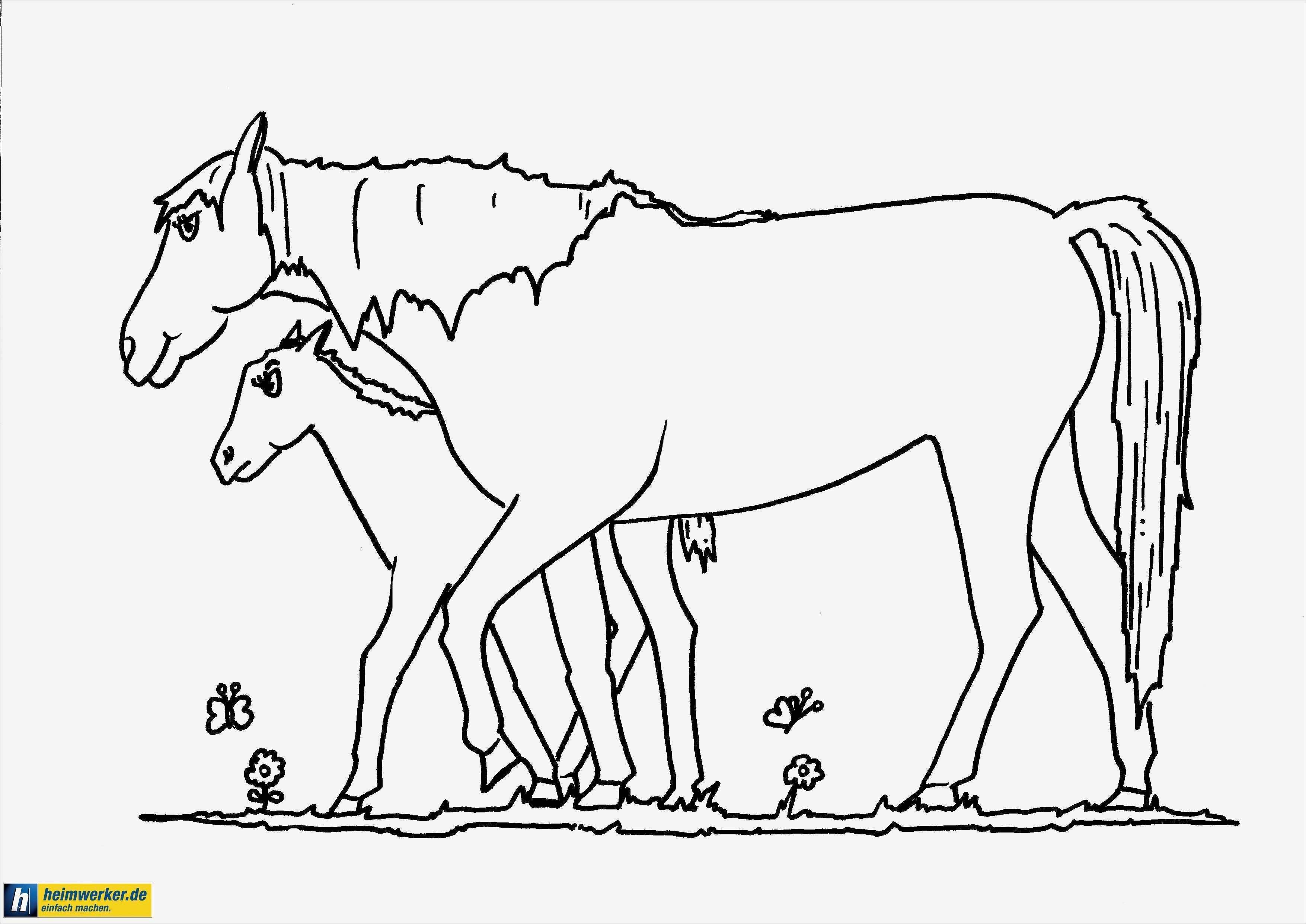pferd vorlage schön ausmalbilder pferde gratis