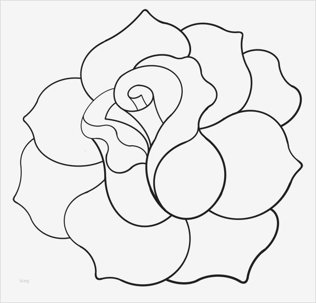 rose zeichnung vorlage inspiration red rose cliparts
